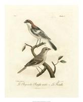 Antique French Birds II Fine Art Print