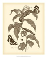 Nature Study in Sepia I Fine Art Print
