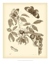 Nature Study in Sepia II Fine Art Print