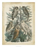 Nature's Gathering III Fine Art Print