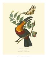 Nature Jardin III Fine Art Print