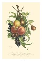 Plentiful Fruits I Fine Art Print
