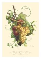 Plentiful Fruits II Fine Art Print
