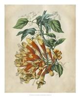 Tropical Beauty II Fine Art Print