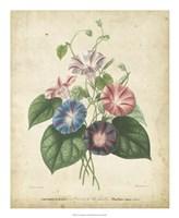 Victorian Bouquet I Fine Art Print