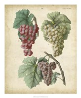Calwer Grapes II Fine Art Print