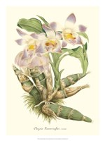 Lavender Orchids I Fine Art Print