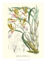Lavender Orchids IV Fine Art Print