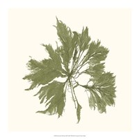 Seaweed Collection III Fine Art Print
