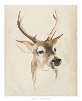 Watercolor Animal Study IV Fine Art Print