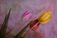Three Tulips II Fine Art Print