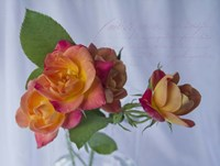 Peachy Rose Fine Art Print