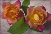 Two Roses Fine Art Print