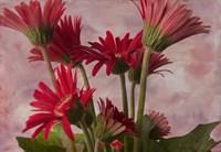 Gerber Garden Fine Art Print