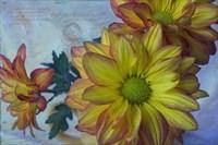 Pelee Mums 2 Fine Art Print