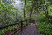 Misty Trail Fine Art Print