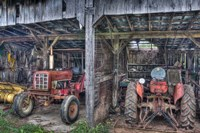 Two Red  Tractors Fine Art Print