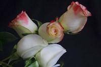 5 Roses Fine Art Print