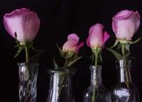 Four Vases Fine Art Print