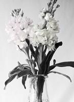 Pink & White Stock2 BW Fine Art Print