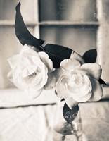 Roses In A Vase BW Fine Art Print