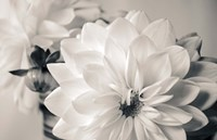 White Beauty BW Fine Art Print