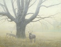 Winter Mist Fine Art Print