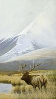 Autumn Uprights, Elk Fine Art Print