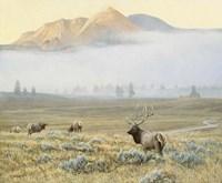 Autumn Elk Fine Art Print
