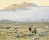 Autumn Elk Fine Art Print