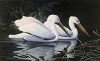 Pelicans Fine Art Print