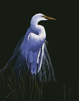 Common Egret In Breeding Plumage Fine Art Print