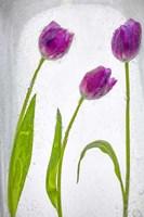 Flores Congeladas 2 Fine Art Print