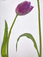 Flores Congeladas 3 Fine Art Print