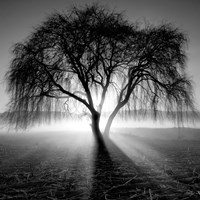Lighting Tree Fine Art Print