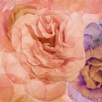 Rosa Cuadrada Fine Art Print