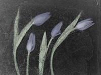 Tulipanes Azules Fine Art Print