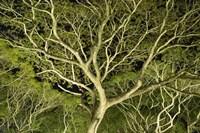 Costa Rica Tree Color 2 Fine Art Print