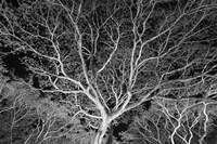 Costa Rica Tree Fine Art Print