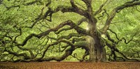 Tree Of Light Color FL Fine Art Print