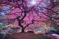 Pink Tree 2 Fine Art Print