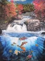 Fish Falls Fine Art Print