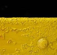 Yellow Button Fine Art Print