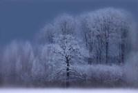 Winter Fine Art Print