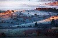 Mist Fine Art Print