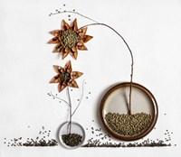 Herbarium 2 Fine Art Print