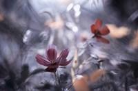 Une Autre Fleur, Une Autre Histoire Fine Art Print