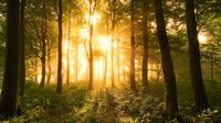 Light In the Forest Fine Art Print