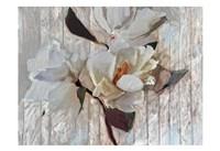 Magnolia1 Fine Art Print