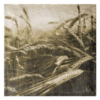 Wheat Fields Fine Art Print